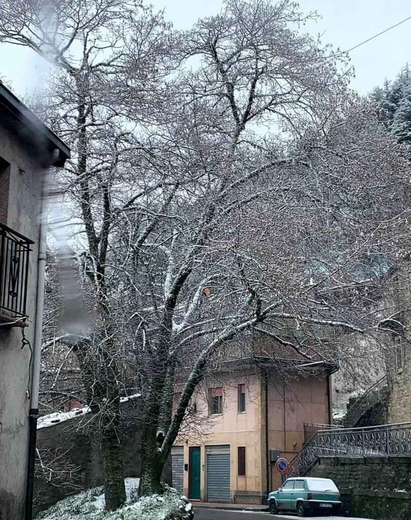 LA FOTO – L'albero ghiacciato